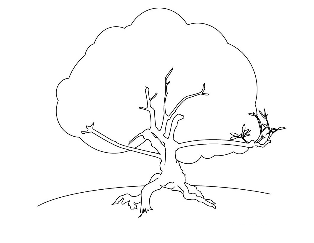 Free Printable Tree Coloring Pages For Kids Tree Coloring Page