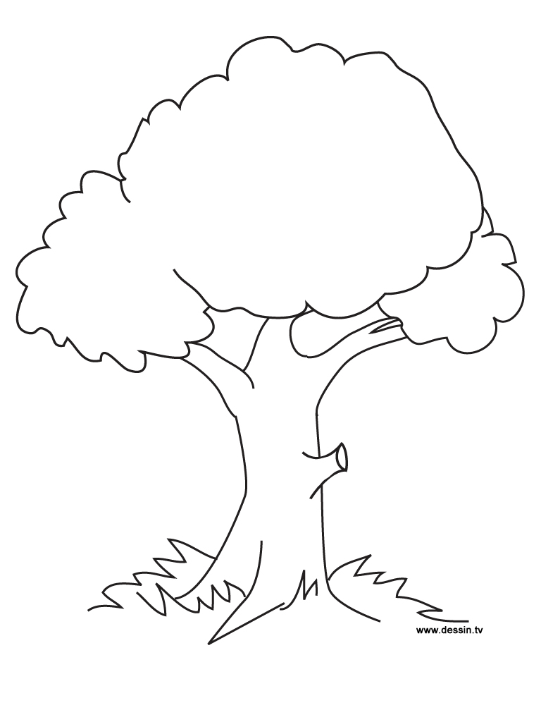 Free Coloring Pages Of How To Draw A Tree Tree Coloring Page For Toddlers