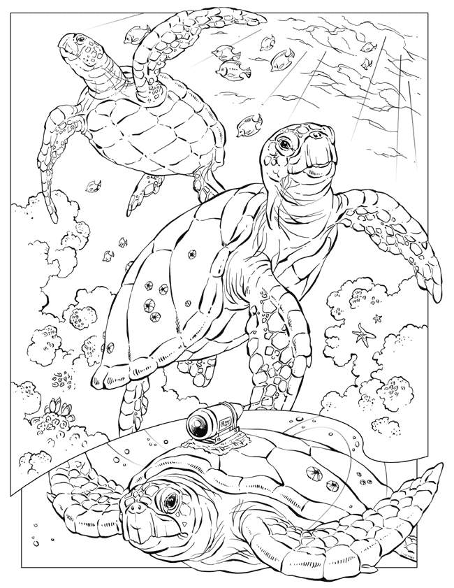 ocean wildlife coloring pages - photo #10