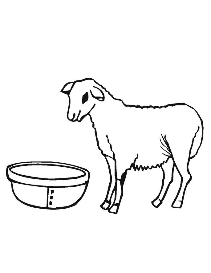 Pictures of Sheep Coloring Page