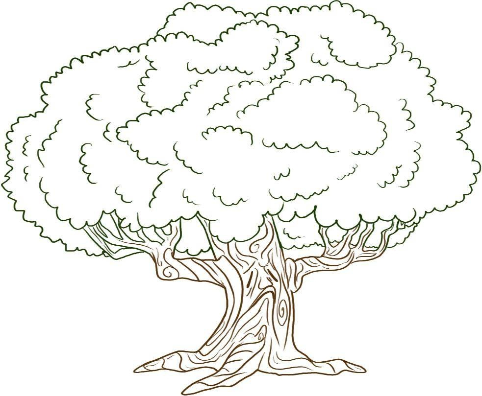 how to draw a family tree template - free printable tree coloring pages for kids