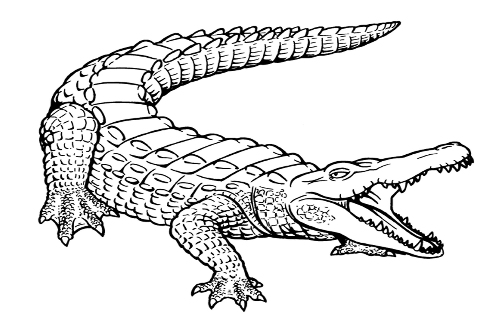 alligator coloring pages free - photo#4