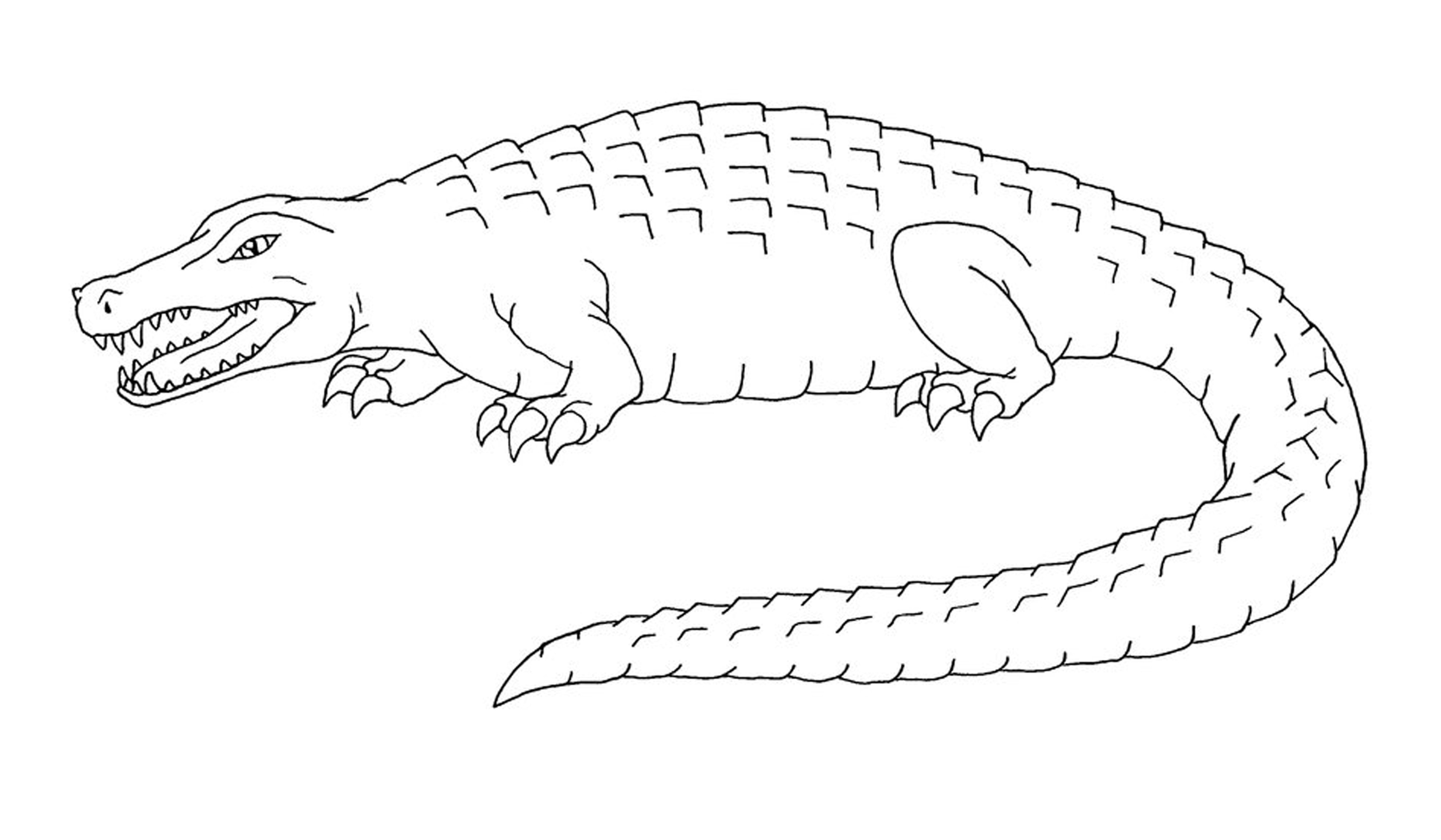 printable coloring pages crocodile - photo #13