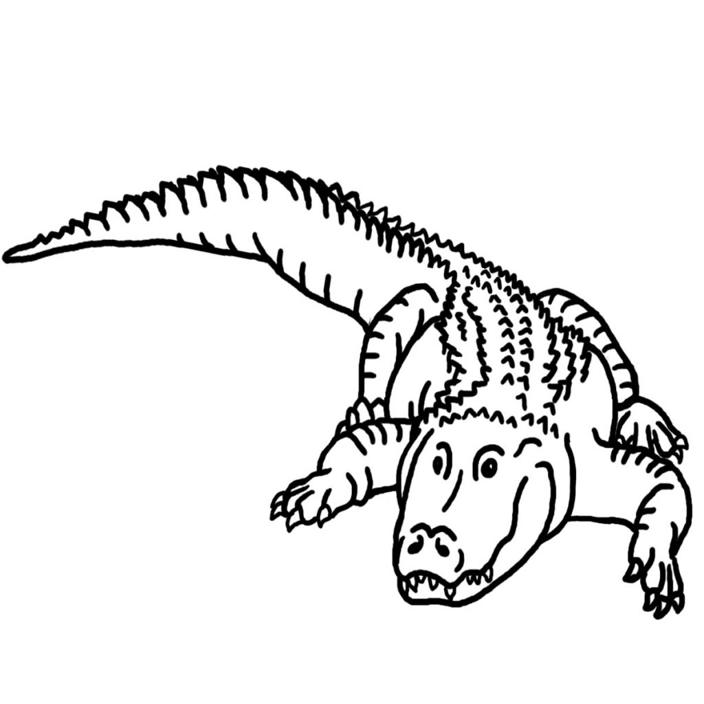free crocodile outline coloring pages