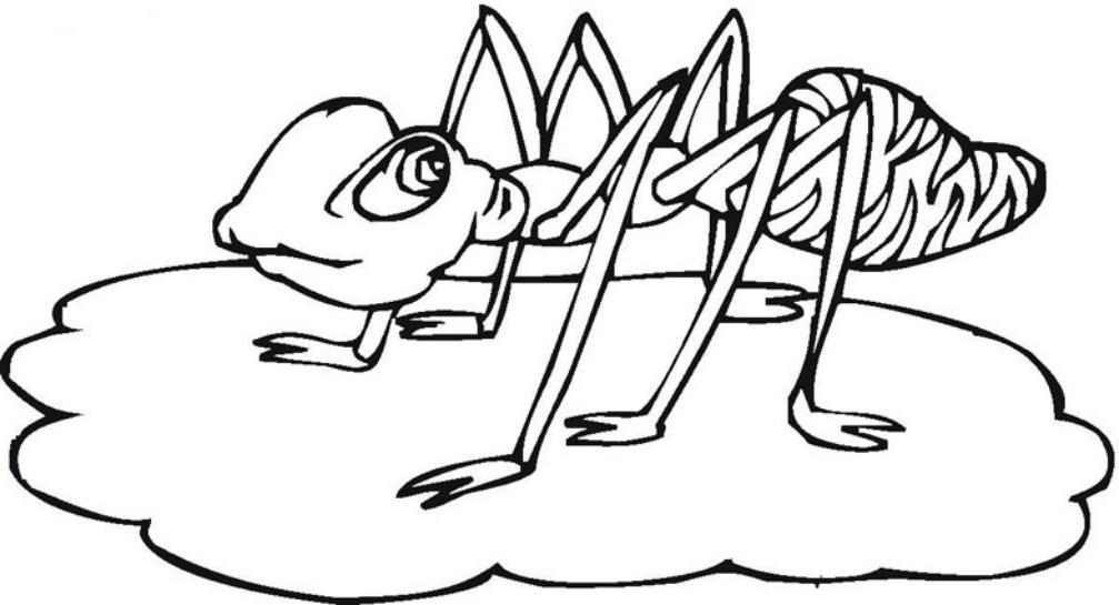Ants Coloring Pages For Kids