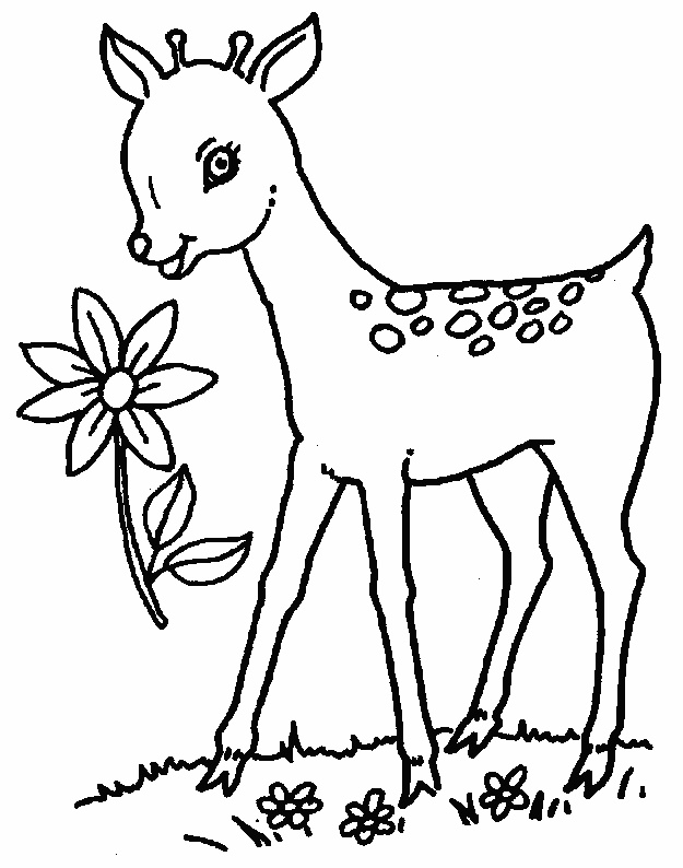 baby deer coloring pages pictures