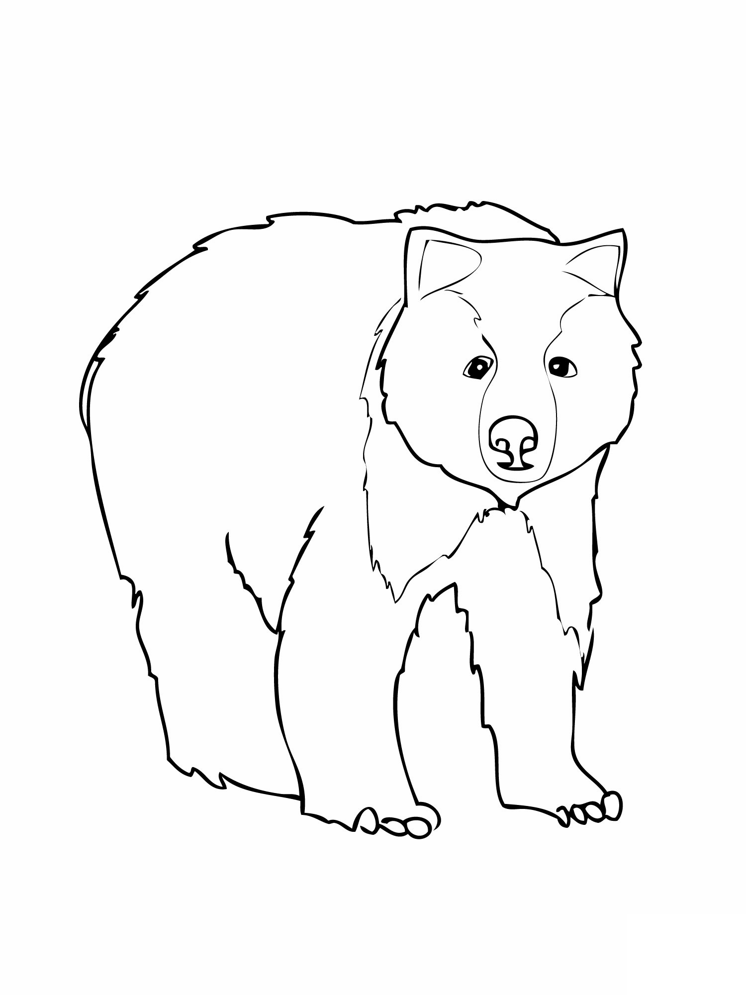 Polar animals coloring pages for kids - Bear Coloring Page