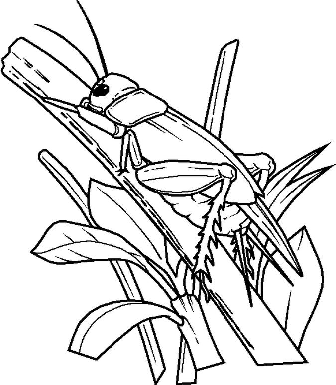 bug coloring page - Insect Coloring Pages