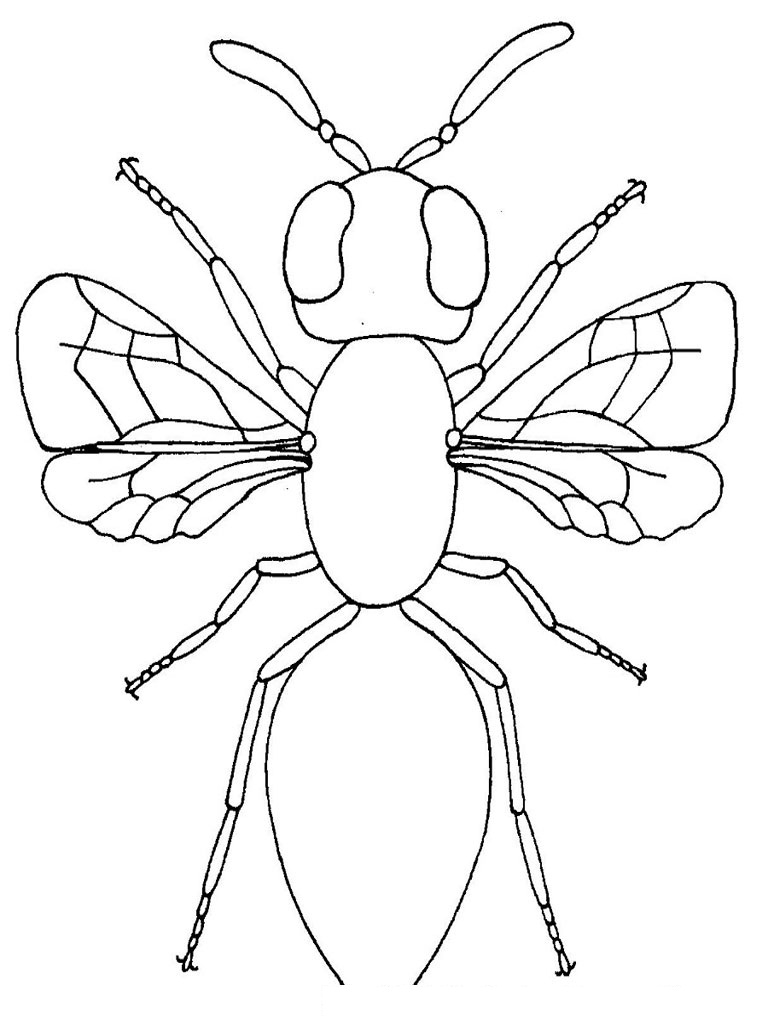 free printable bug coloring pages - photo#34