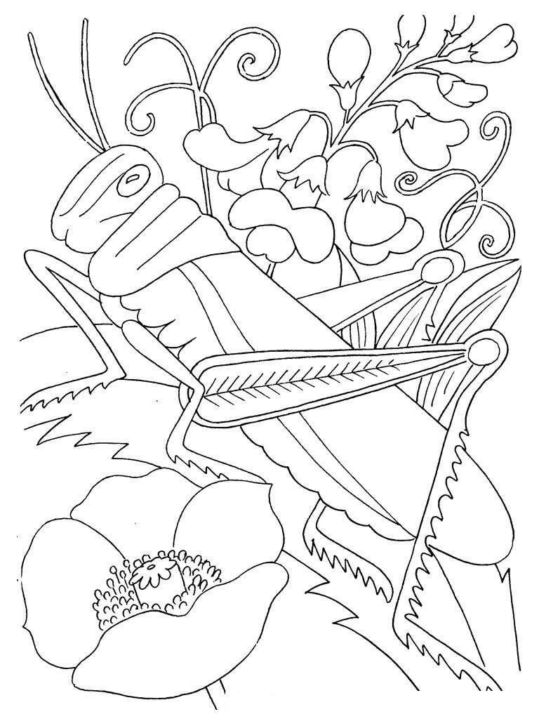 spring insects coloring pages - photo #35