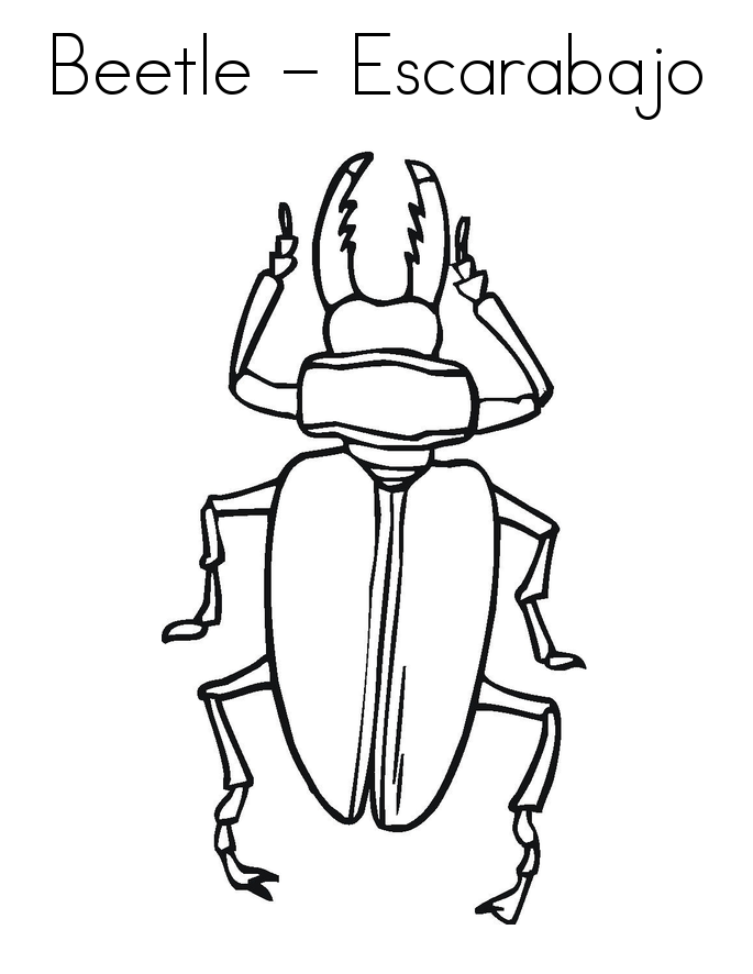 bug coloring book pages - photo#22