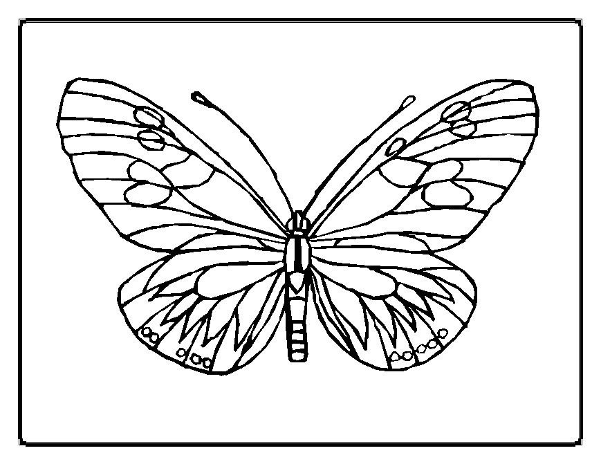 Butterfly Color Pages