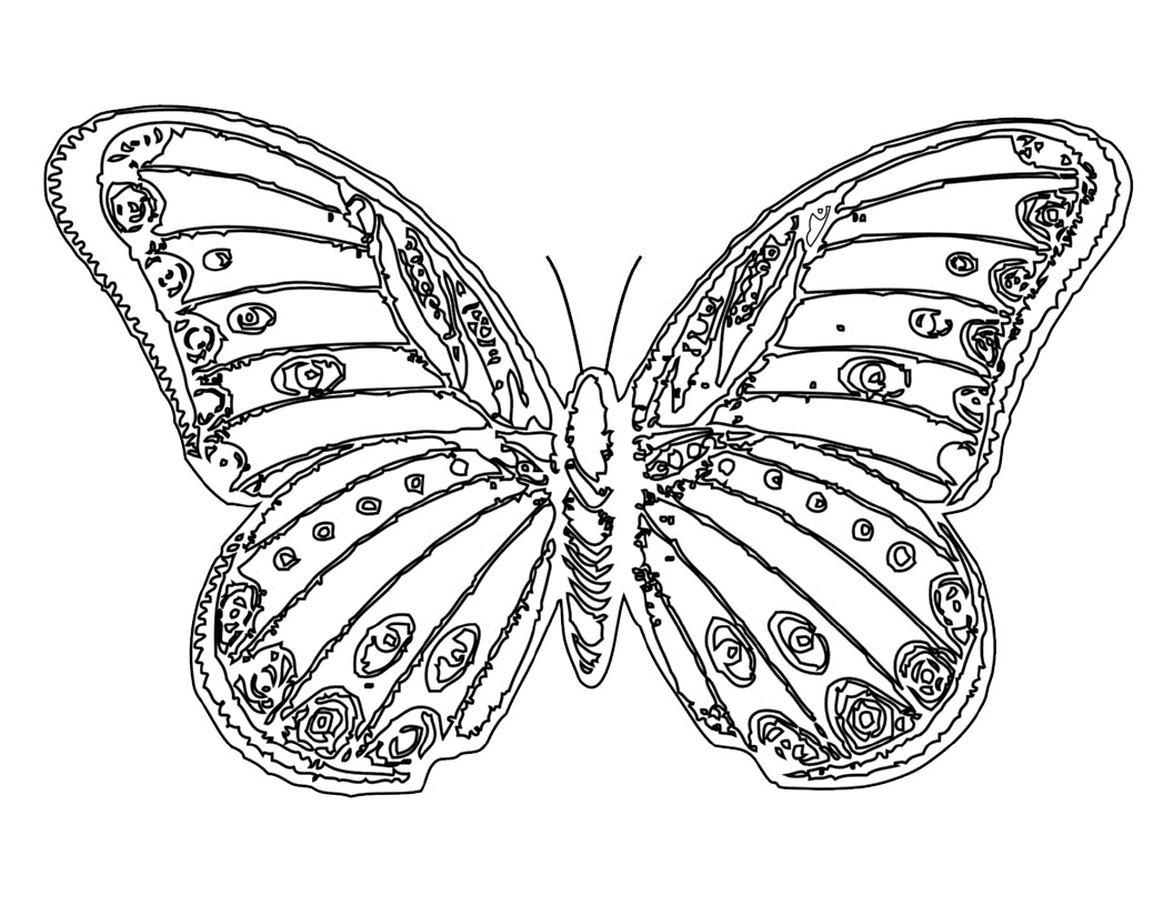 Butterfly coloring page symmetry - Butterfly Coloring Page For Kids