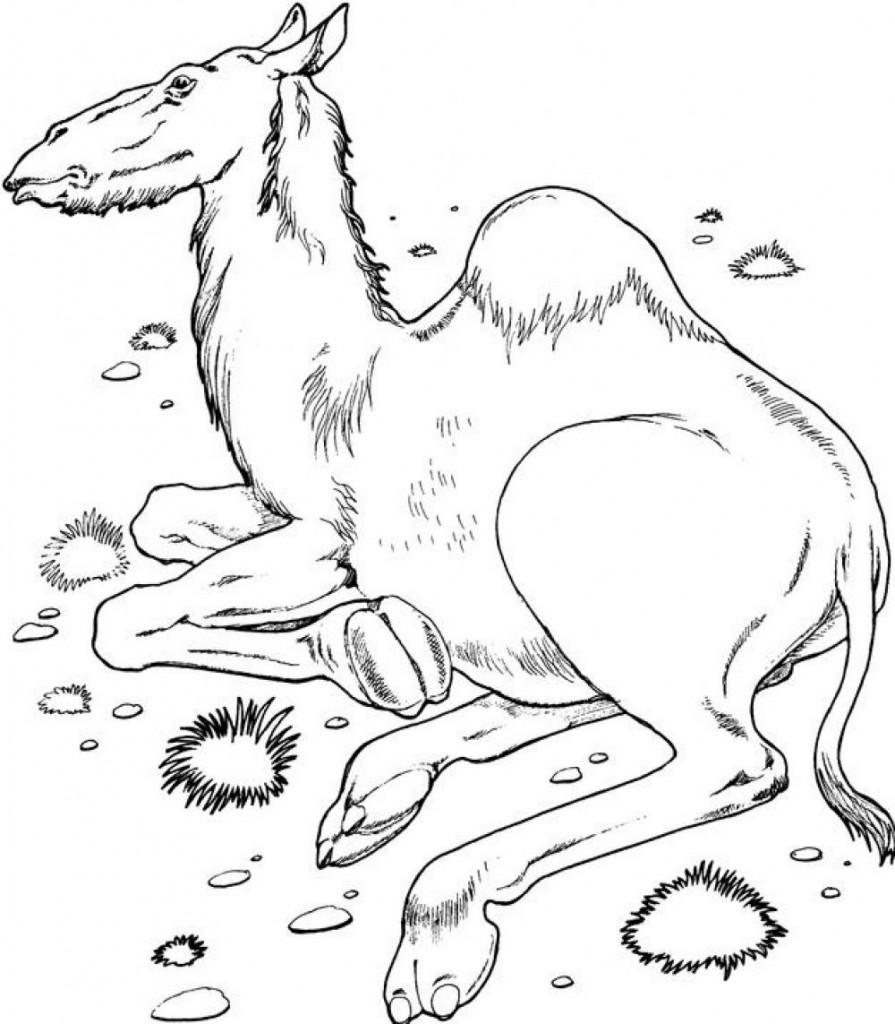 camel coloring pages for kids - photo#20