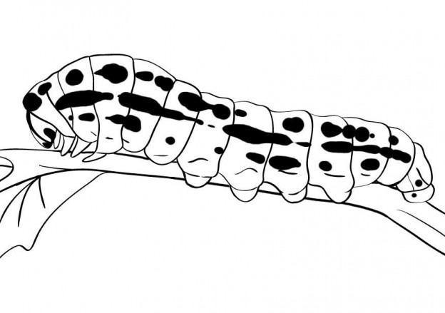 caterpilla coloring pages | Free Printable Caterpillar Coloring Pages For Kids