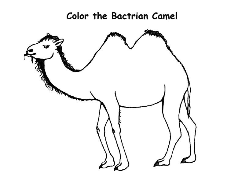 Free Printable Camel Coloring Pages For Kids Camel Coloring Pages