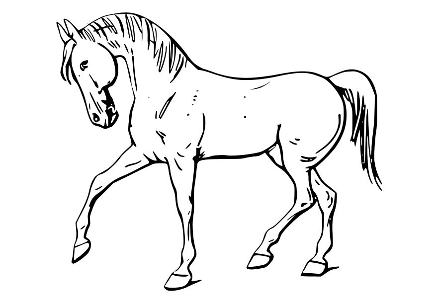 coloring pages printable horses | Draft Horse Coloring Pages For Kids