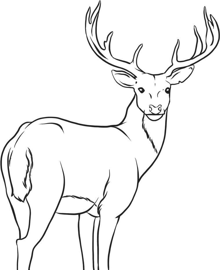 Colouring Pages Print : Free printable deer coloring pages for kids