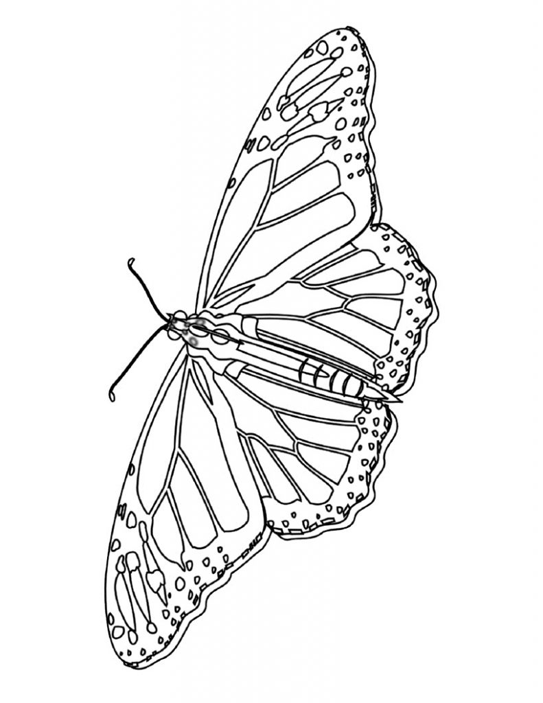 Coloring Page of Butterfly