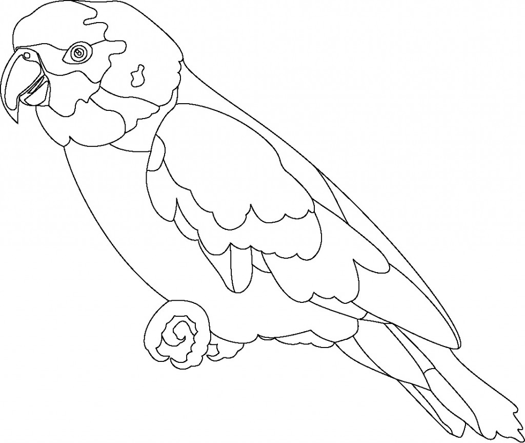Coloring Page of Parrot For Kids