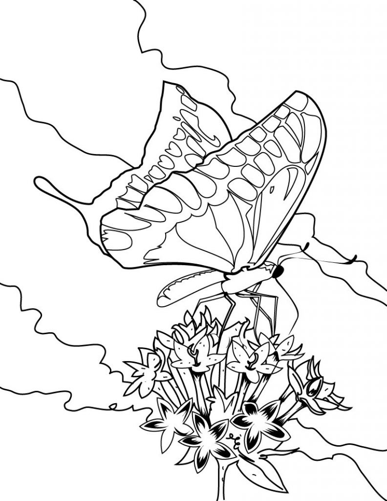 Free Printable Butterfly Coloring Pages For Kids - photo#47