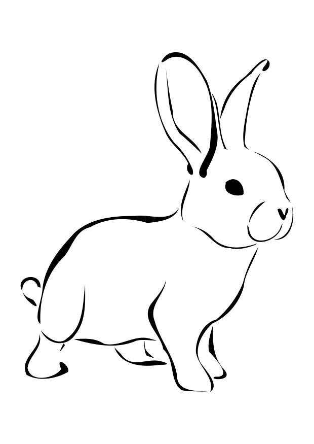 coloring pages rabbit - photo#15