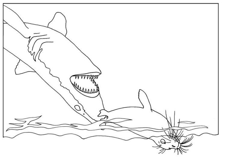 Coloring Pages Sharks Printable