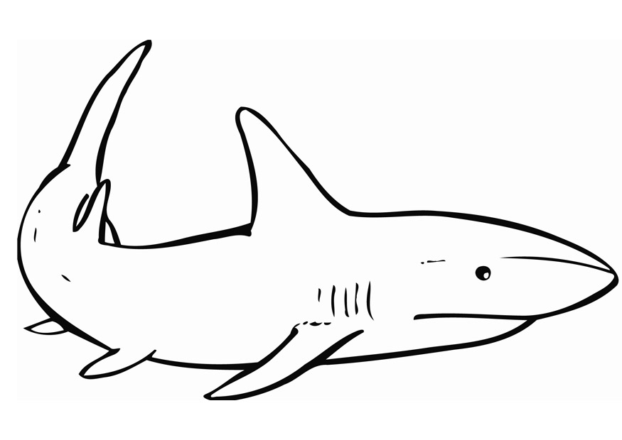 coloring page of a shark - free printable shark coloring pages for kids
