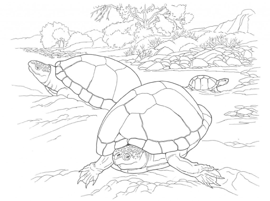 free coloring turtle pages - photo#11