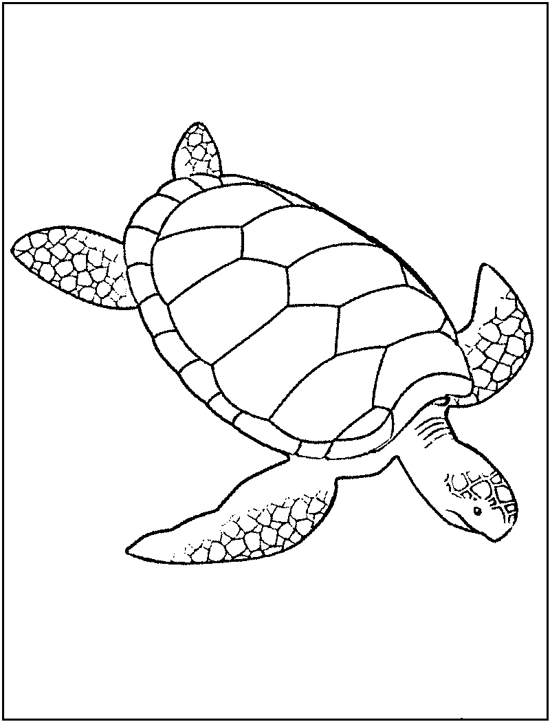 Ninja Turtle Coloring Pages   Kids #1