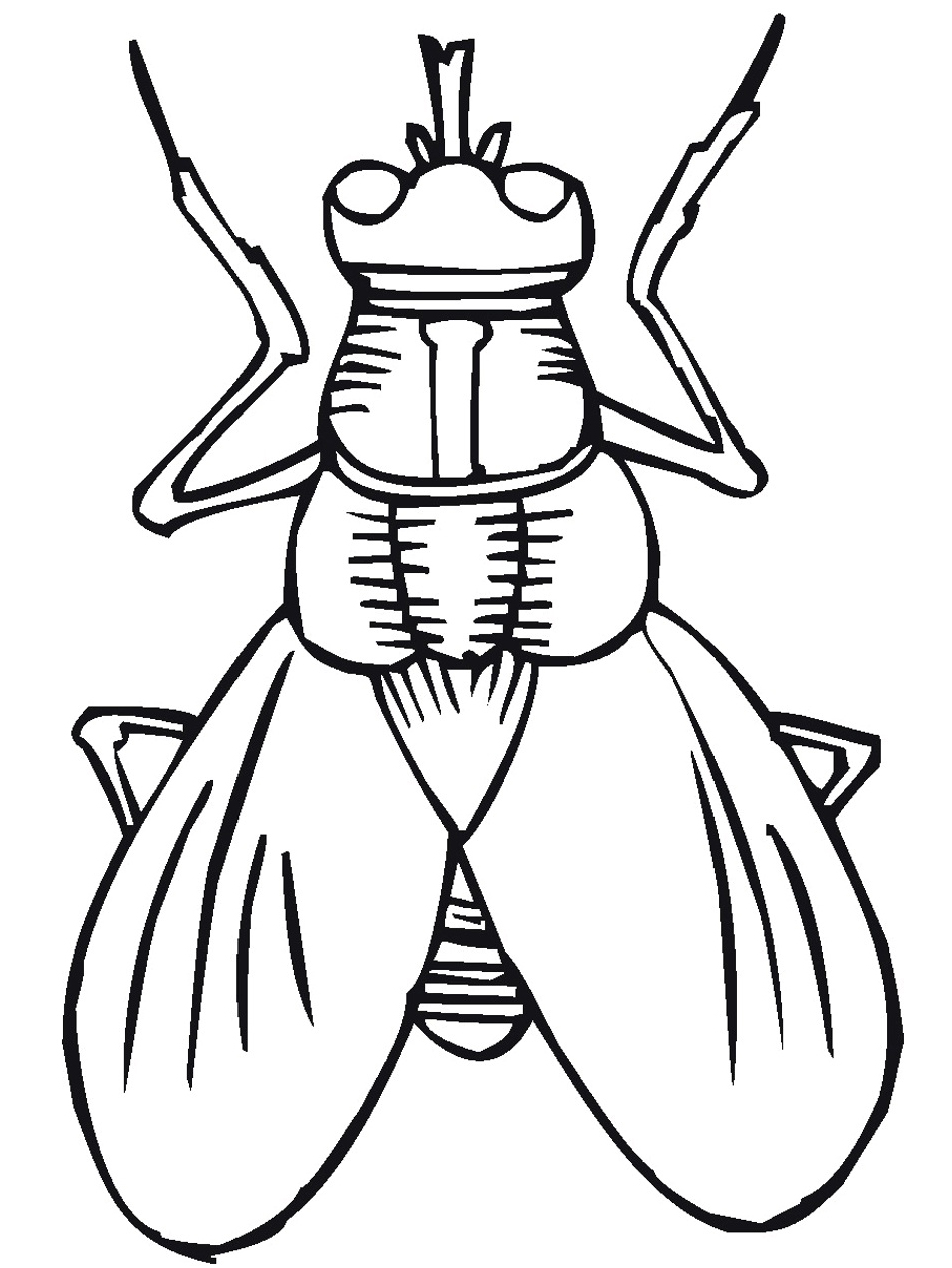 coloring pages of bugs bunny - Insect Coloring Pages