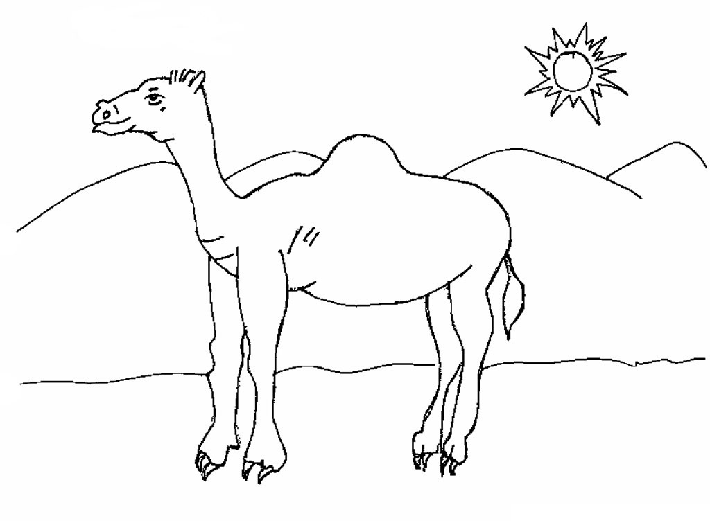 free printable camel coloring pages for kids. Black Bedroom Furniture Sets. Home Design Ideas