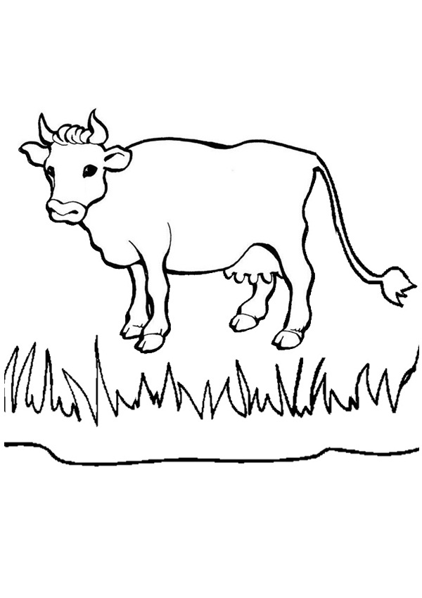 printable cow coloring pages - photo#43