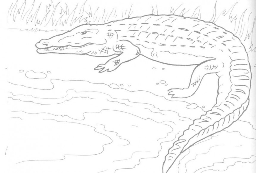 printable coloring pages crocodile - photo #8