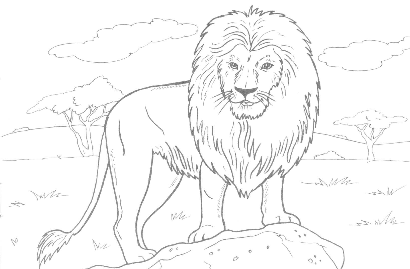 Free printable lion coloring pages for kids for Coloring pages of wild animals