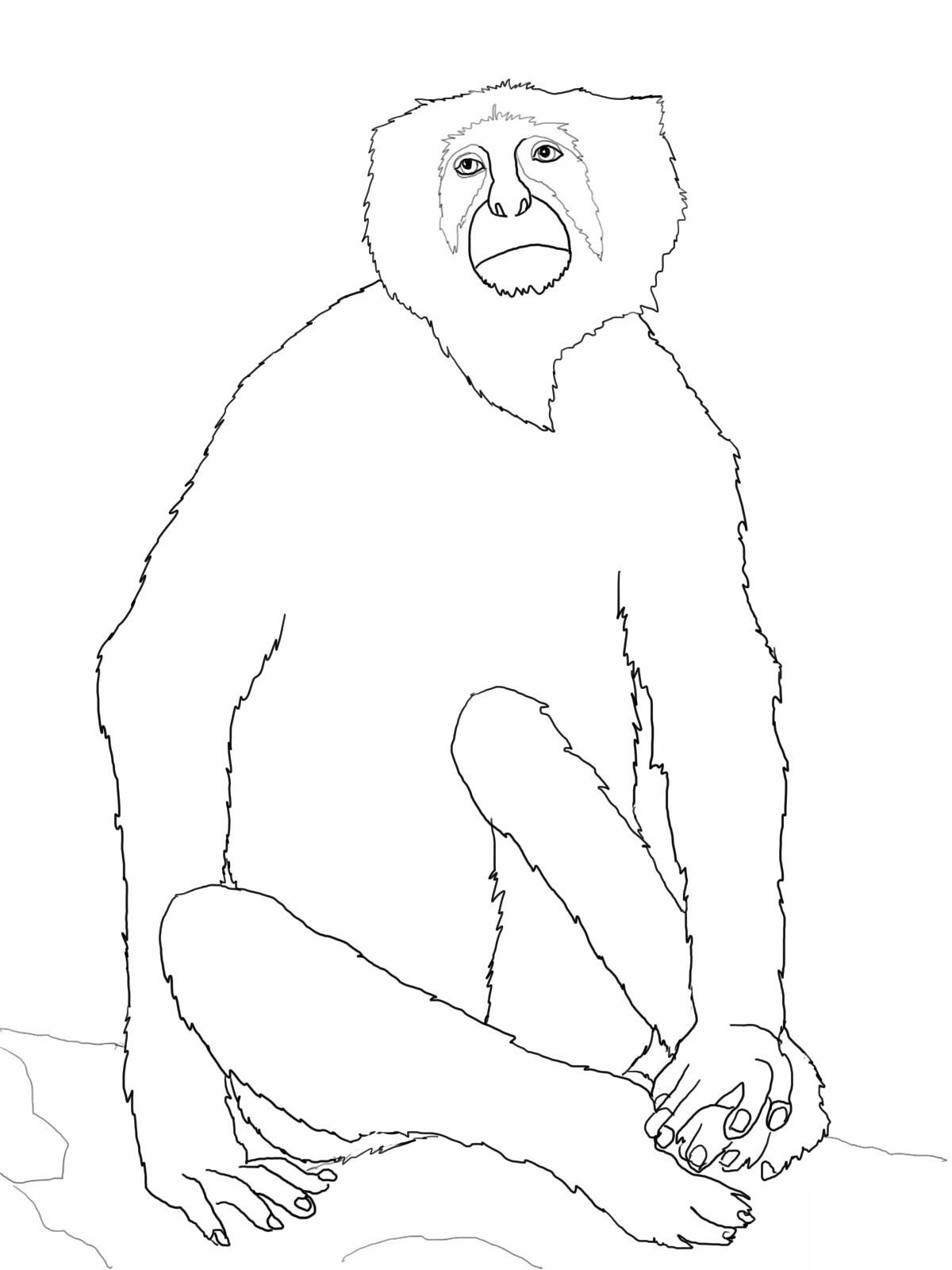 Free Printable Monkey Coloring