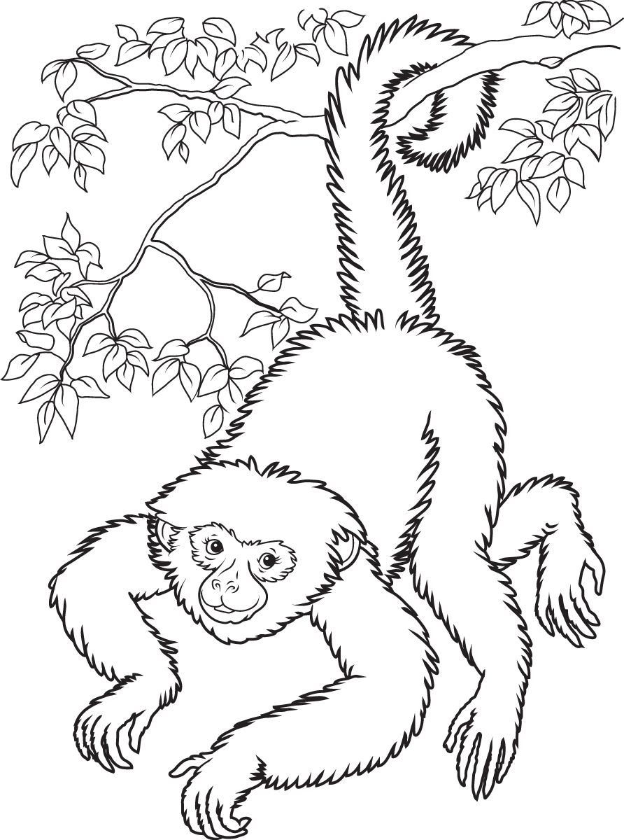 hanging monkey coloring pages - photo #16