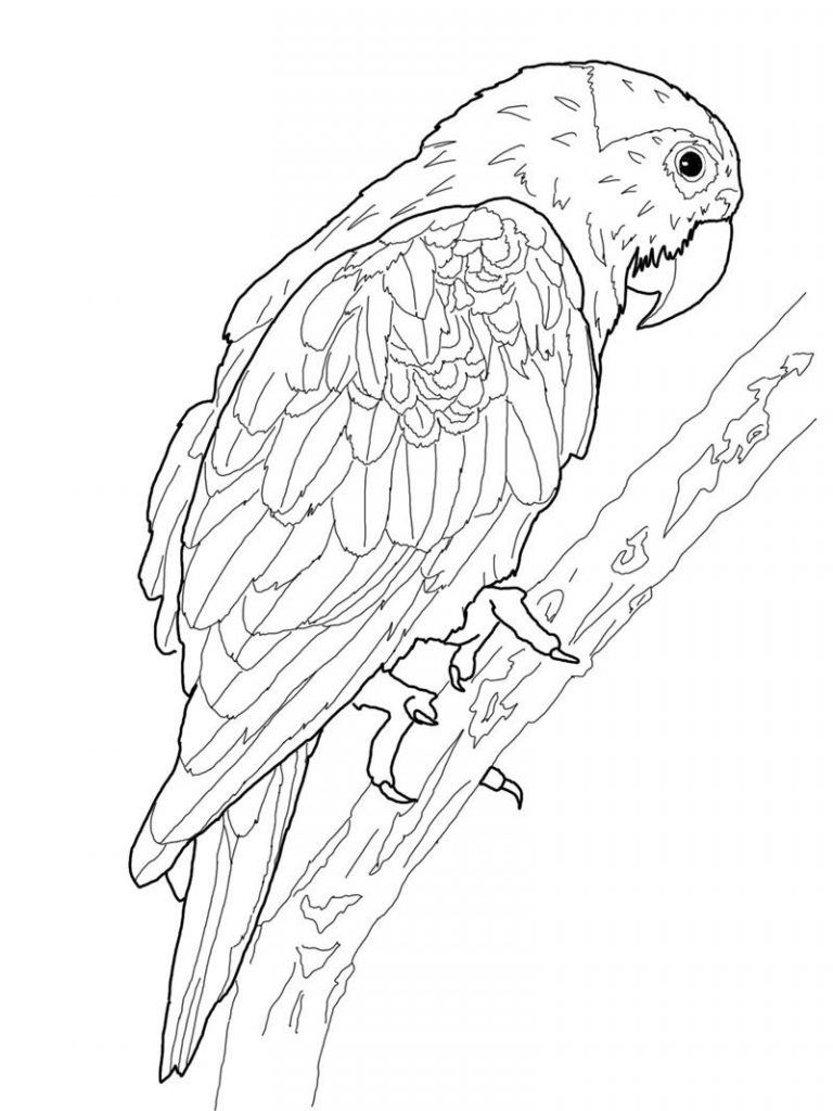 Free printable parrot coloring pages for kids for Free coloring book pages to print