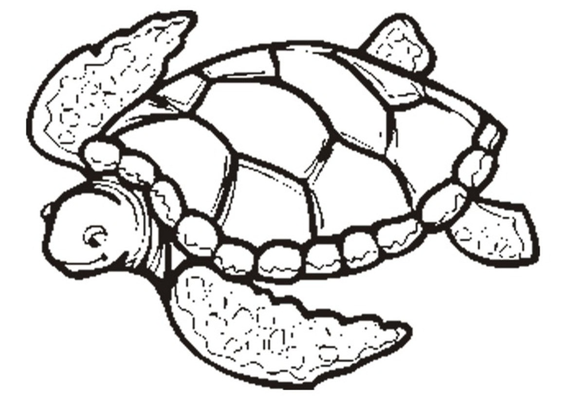 free coloring turtle pages - photo#2