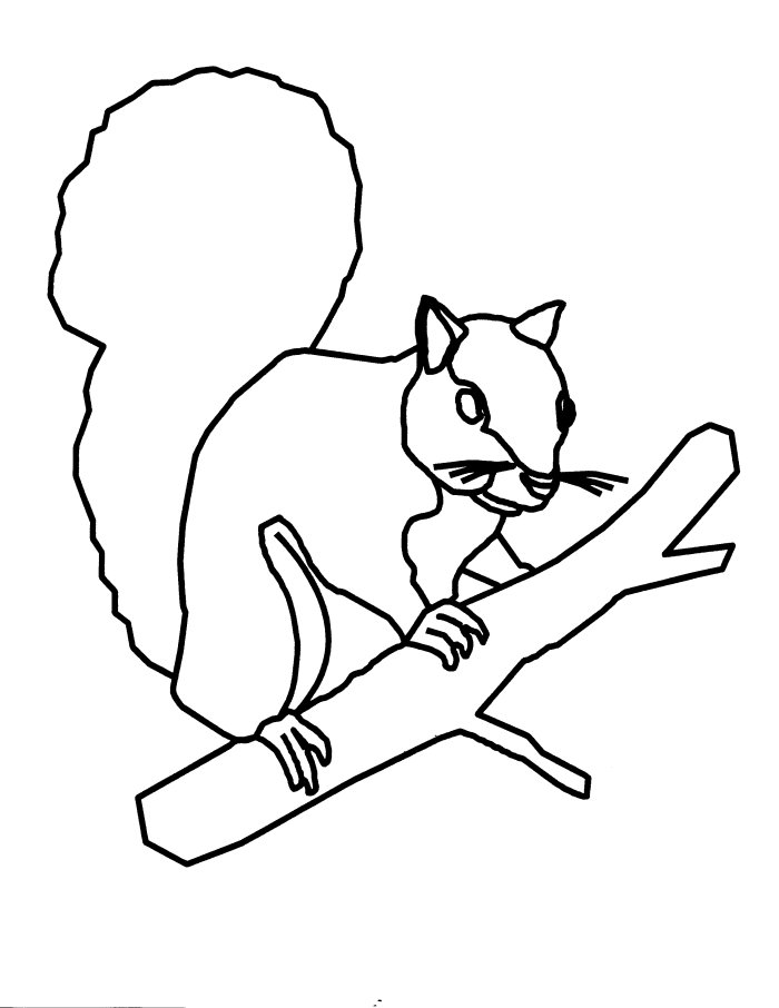 Coloring Pages of Squirrel
