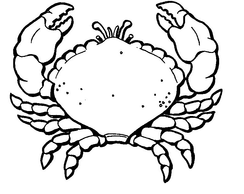 crab coloring pages for printable