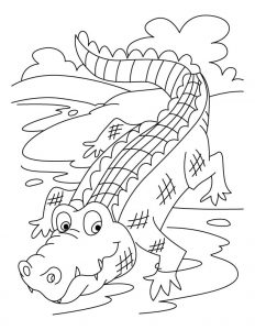 Coloring page  Crocodile  ColorKidnet