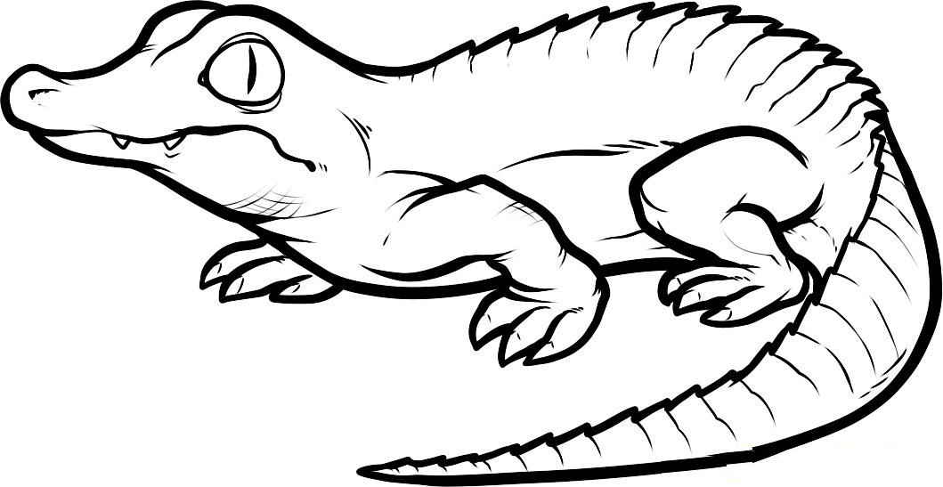 printable coloring pages crocodile - photo #10