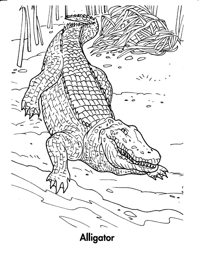printable coloring pages crocodile - photo #24
