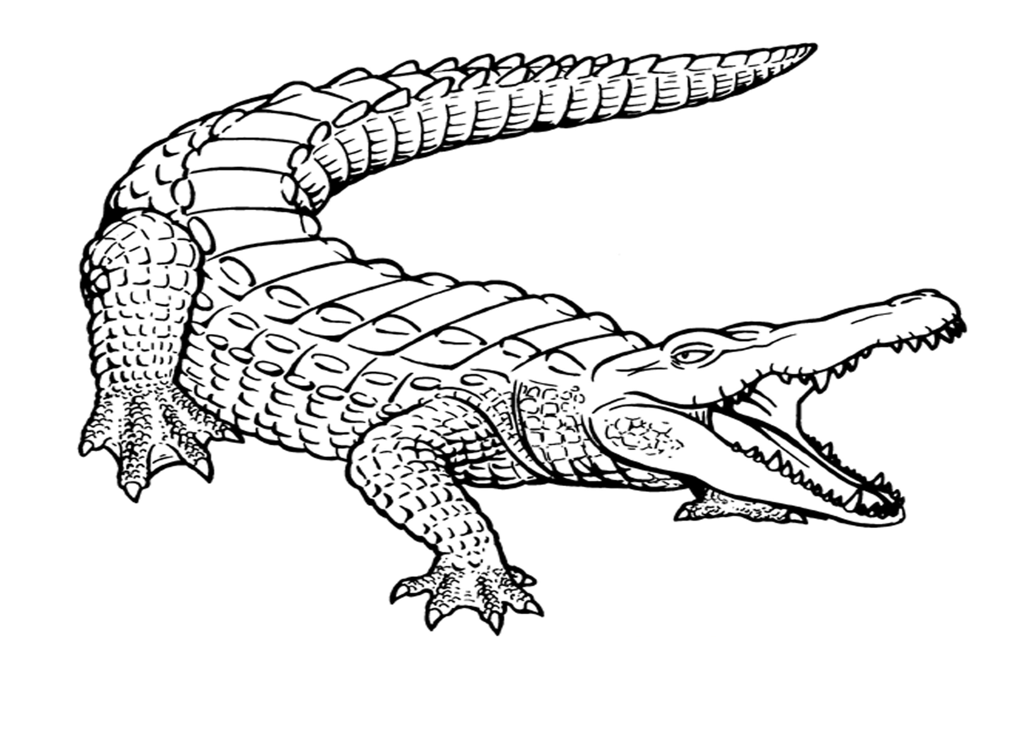 printable coloring pages crocodile - photo #4
