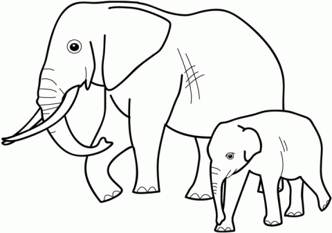 baby elephant coloring pages print - photo#42