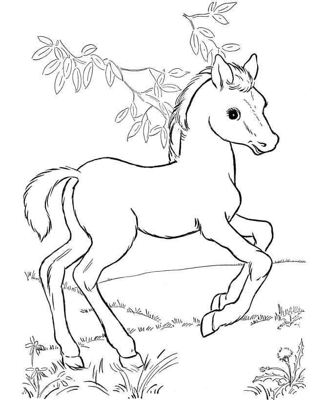 free printable horse coloring pages for kids - Cute Baby Seahorse Coloring Pages