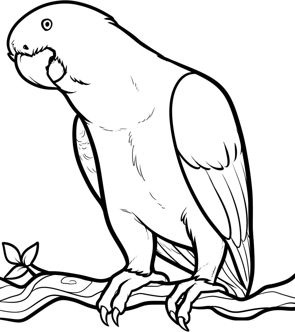 cute parrot coloring pages - Parrot Pictures To Color