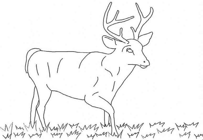 deer coloring pages - photo#23