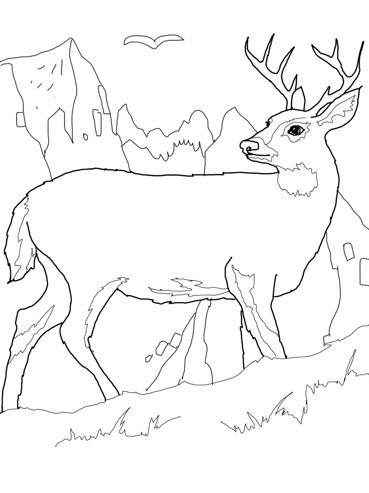 Free coloring pages realistic animals - Deer Coloring Pages Pictures